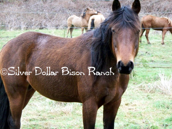 Welcome to Silver Dollar Bison Ranch!
